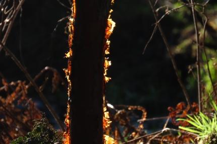 bark on fire