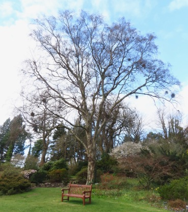 mature tree in Botanics Mar 20